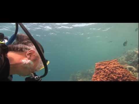Giant gelly fish at Koh Rang 22.01.2012.wmv
